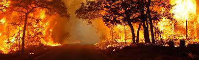File:Wildfire (11).jpg