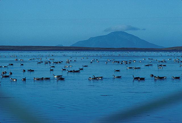 File:Izembek Lagoon Amak Island.png