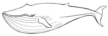 File:Whale.jpg