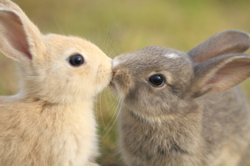 File:Bunny love.png