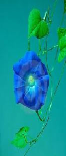 File:Blueflower.jpg