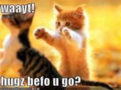 File:Kitty!!!(2).jpg