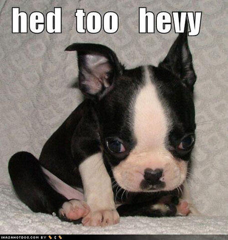 File:Hed-too-heavy-cute-puppy-lo.jpg