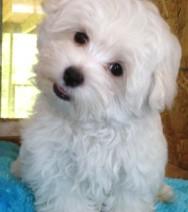 File:Small dog.jpg