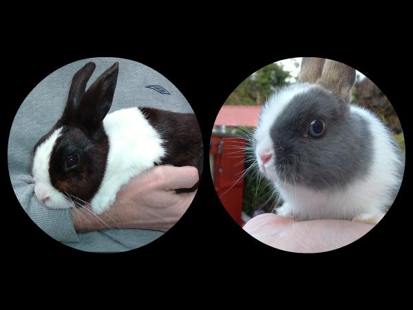 File:My Bunnys.jpg