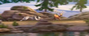 Shira chasing gazelle