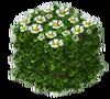 Siepe di fiori bianchi