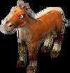 Clean brown horse