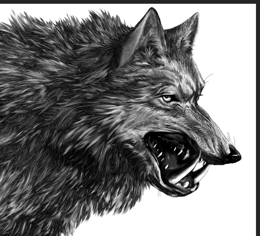 Direwolf A Song Of Ice And Fire Wiki Fandom Powered By