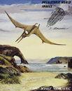 Pteranodon - Cretaceous reptile