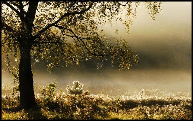 File:Enchanted in morning mist by jchanders.jpg