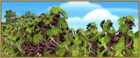 ملف:Vineyard.jpg