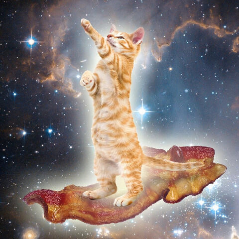 File:Baconcatlarge.jpg