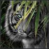 File:Dark Tiger.png