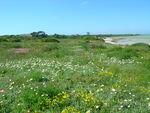 Spring flowers in Namaqualand