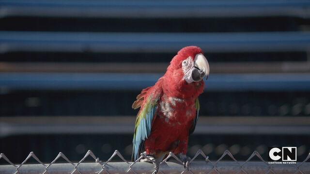 File:Parrot stopwatch.jpg
