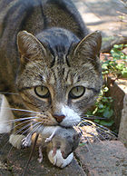 140px-Cat and mouse-1-