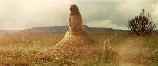 File:Prairie dog.jpg