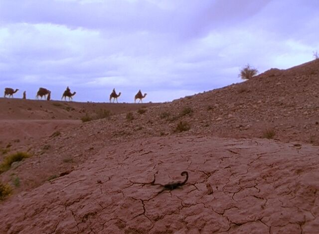 File:Scorpion and camels.jpg
