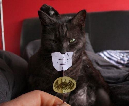 File:BatmanCat.jpg
