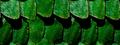 Миниатюра для версии от 19:58, июня 28, 2012