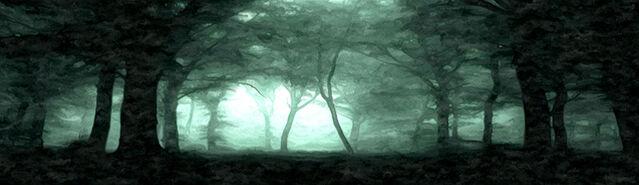 File:Initium ShadowedForest.jpg
