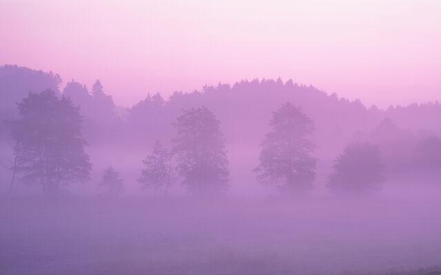 File:Pink Forest.jpg