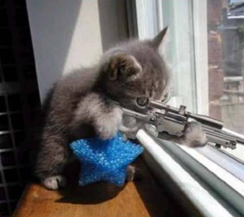 File:Sniper-Cat-random-32283357-500-444.jpg