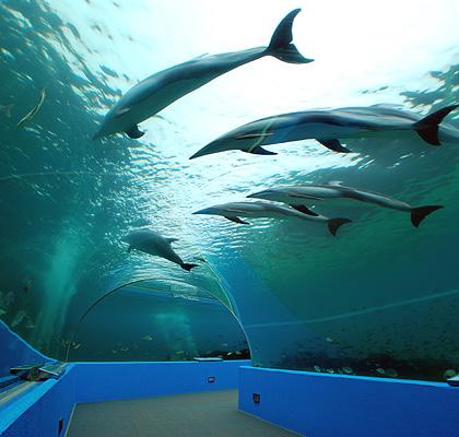 File:Notojima Aquarium.jpg