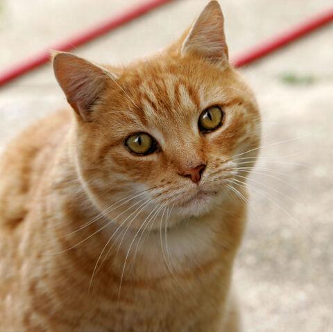 File:Cat03.jpg