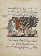 Abbasid Caliphate, Outdoor Scene of A Mad Dog Biting a Man, Arabic Translation of the Materia Medica, 1224 AD