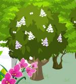 Chestnuttree