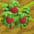 Raspberry 70