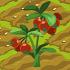 Cowberries 70