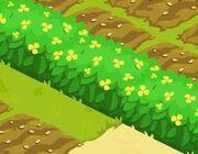 FloweryHedge