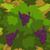 Grapes 70