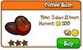 Coffee bush shop