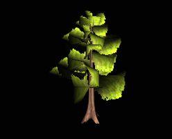 Tree leafy large