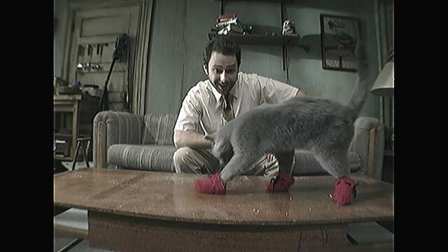 File:Kitten-mittens2.1.jpg