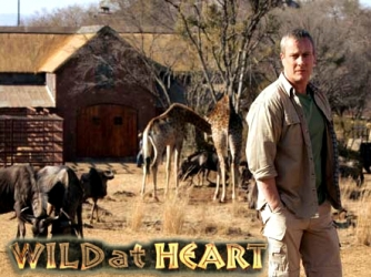 File:Wild at heart.jpg
