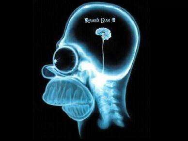 Minuscule Brain 1024 768