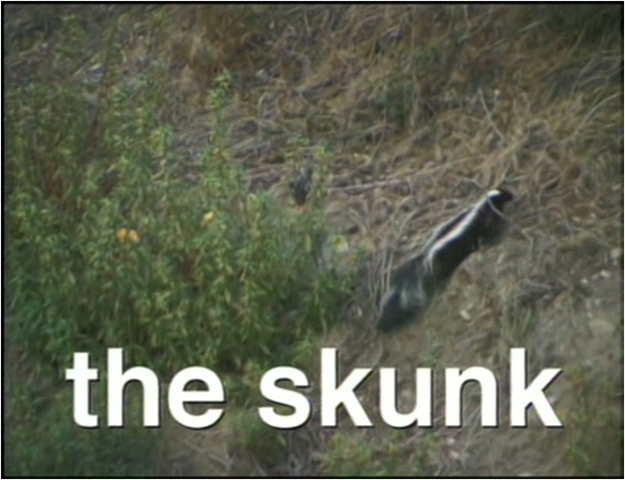 File:The Skunk.png