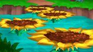 Sunflower Stream-The Never Bloom!01