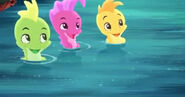 Seahorse-The Seahorse Roundup18