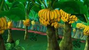Have-a-Banana Grove01
