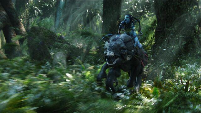 File:Neytiri Riding.jpg