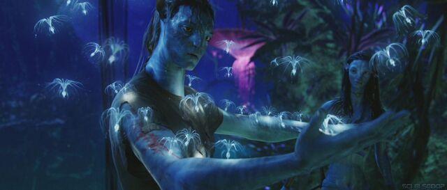 File:James-Camerons-Avatar-30.jpg