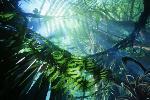 File:Userbox lovesPandForest.png