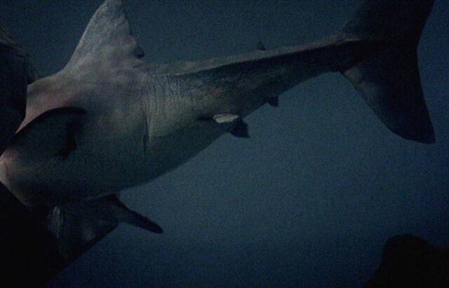 File:Animatronic shark montage.jpg