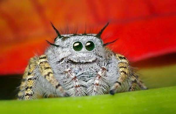 File:Happy-spider.jpg